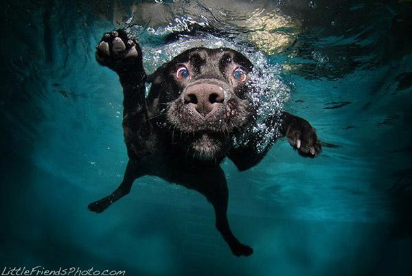 cachorros-debaixo-da-agua-4