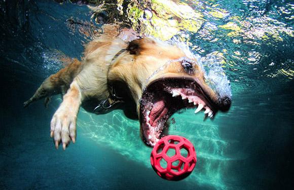 Cachorros debaixo d'água
