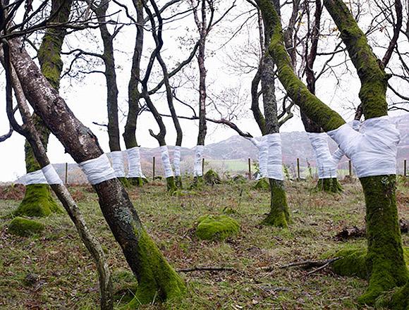 Ilusões de ótica com árvores (fotografia) - Zander Olsen (1)