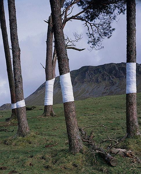 Ilusões de ótica com árvores (fotografia) - Zander Olsen (2)