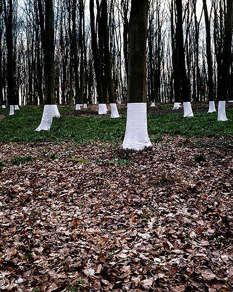 Ilusões de ótica com árvores (fotografia) - Zander Olsen (3)