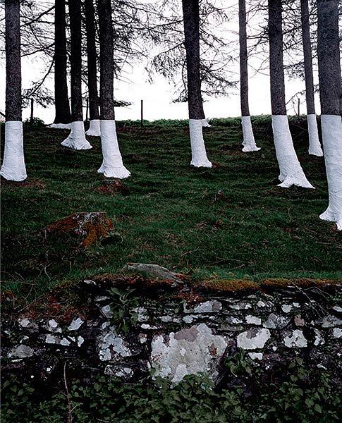 Ilusões de ótica com árvores (fotografia) - Zander Olsen (4)