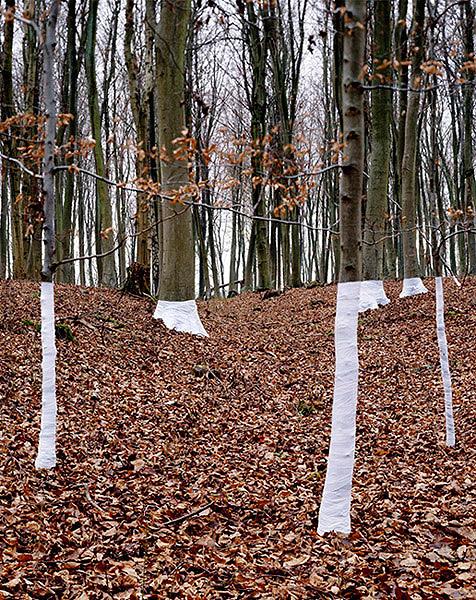 Ilusões de ótica com árvores (fotografia) - Zander Olsen (5)