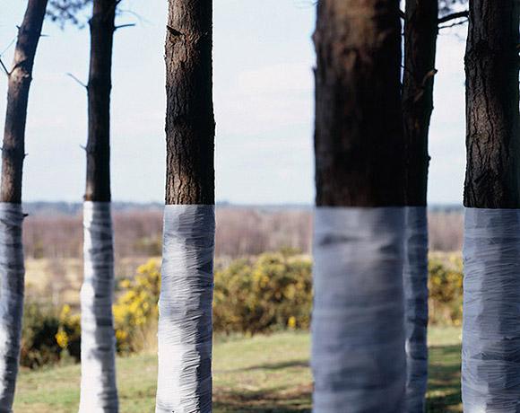 Ilusões de ótica com árvores (fotografia) - Zander Olsen (8)