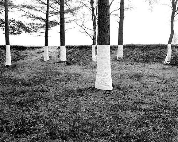 Ilusões de ótica com árvores (fotografia) - Zander Olsen (9)